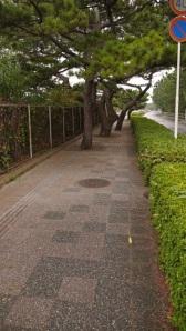 TreesChiba_900