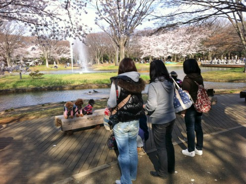 SakuraDogs03_800