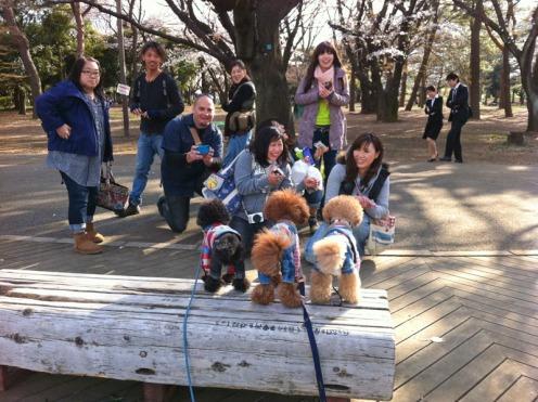 SakuraDogs05_800