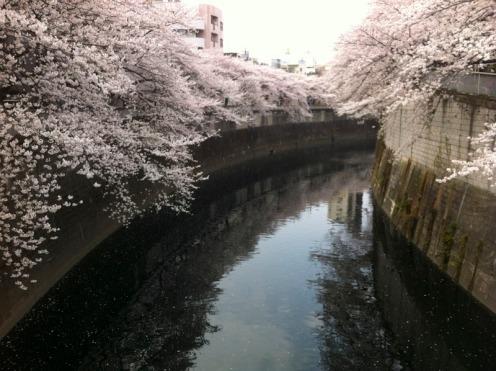 77Stations-Sakura01_800