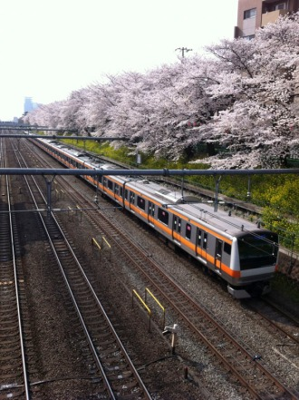 77Stations-Sakura03_800