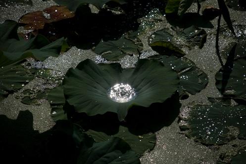Matsuhara-LotusWaterDome